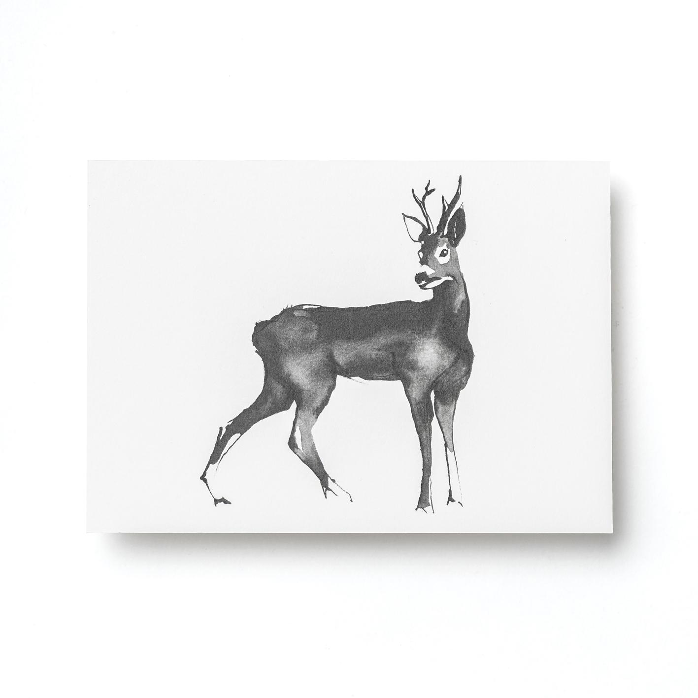 Roe deer postcard
