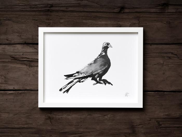 wood pigeon fine art print
