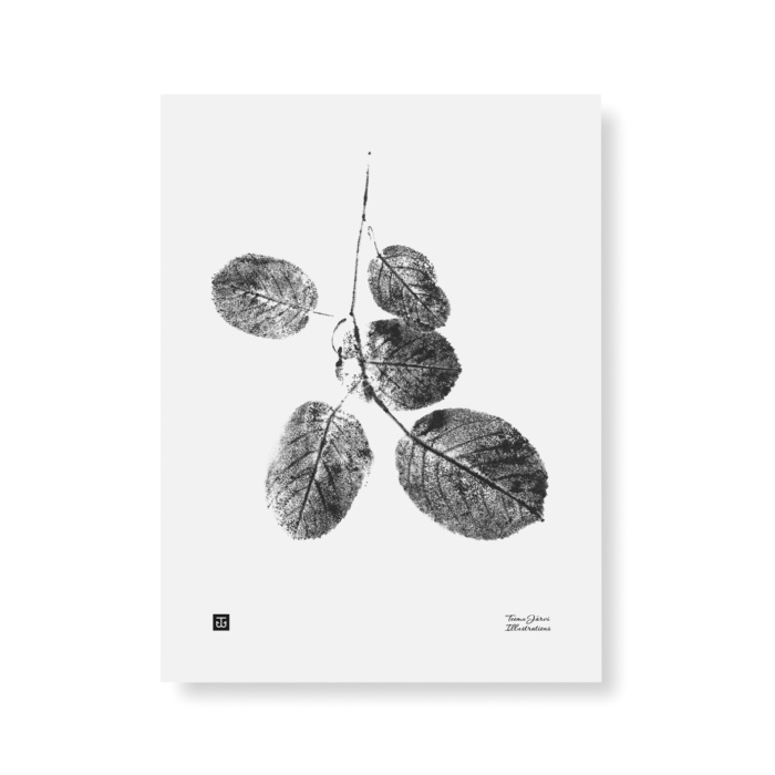 Black & White goat willow branch poster
