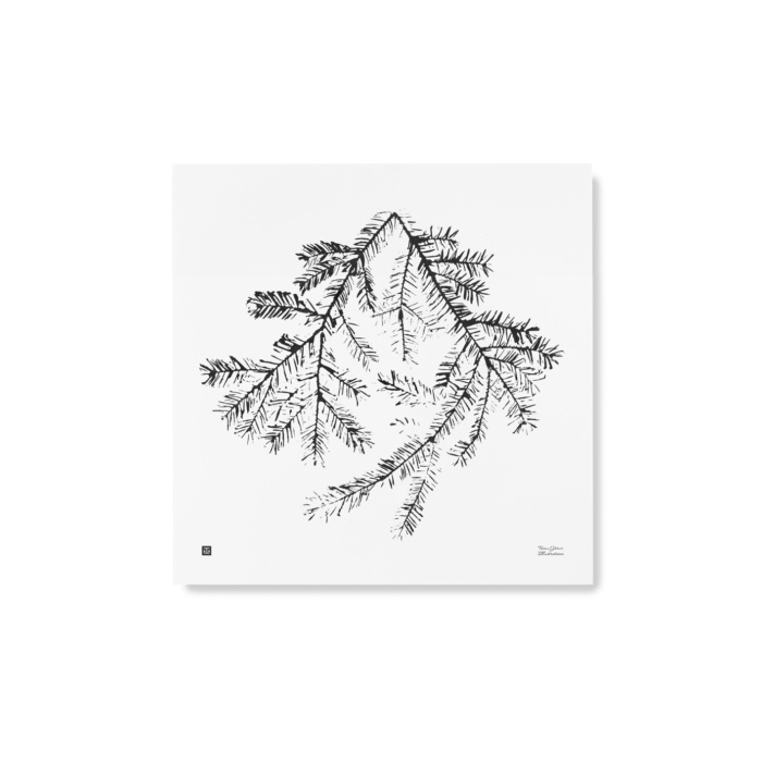 Spruce Branch Art Print - black and white - Teemu Jarvi Illustrations