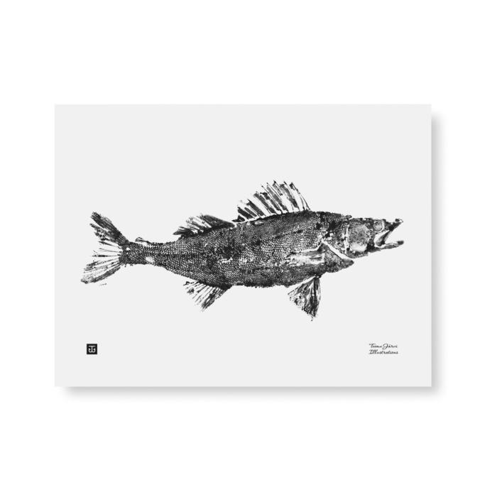 Black & White Zander art print
